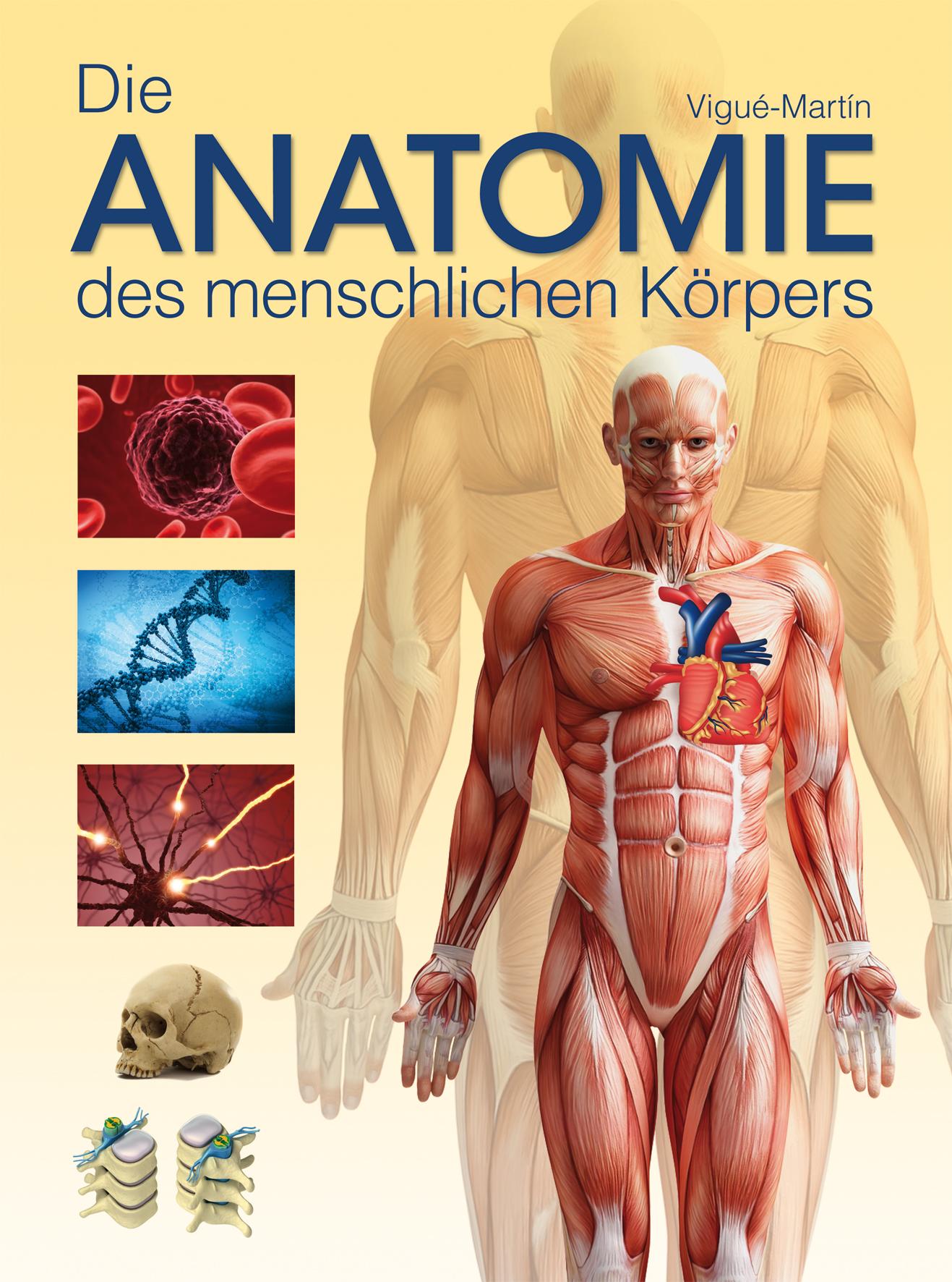 Die Anatomie des menschlichen Körpers - Jordi Vigué-Martin