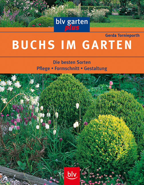 Buchs im Garten: Pflege. Formschnitt. Gestaltun...