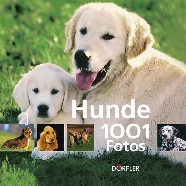 Hunde - 1001 Fotos