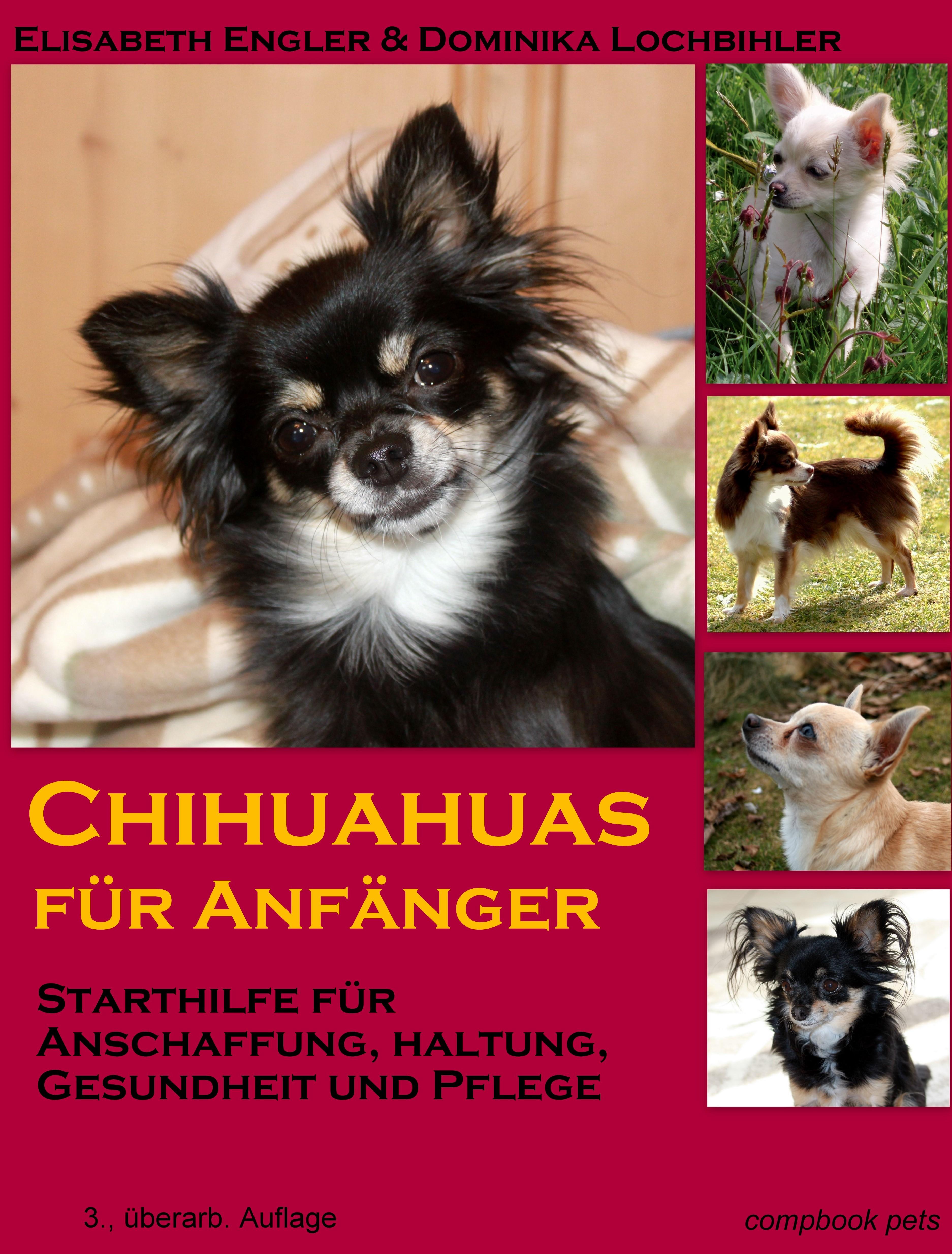 Chihuahuas für Anfänger: Starthilfe für Anschaf...