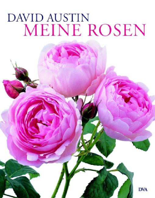 Meine Rosen - David Austin