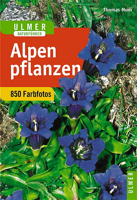 Alpenpflanzen - Thomas Muer