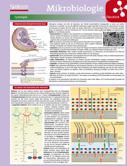 Lerntafel: Mikrobiologie im Überblick (Lerntafe...