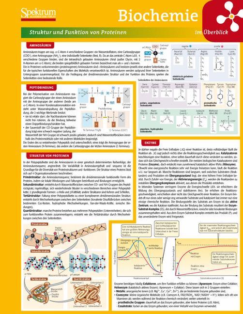 Lerntafel: Biochemie im Überblick (Lerntafeln B...