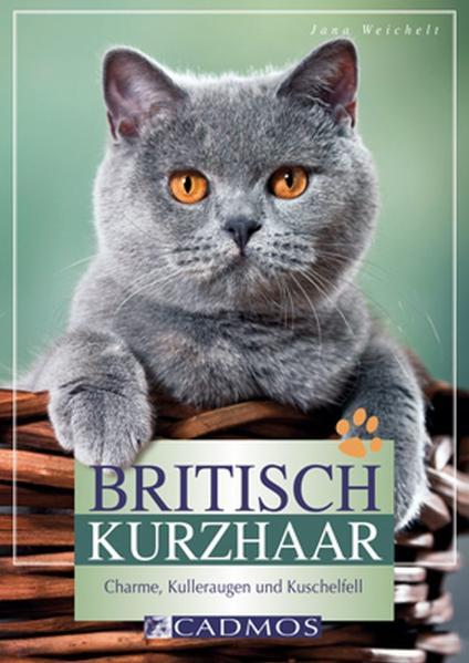 Britisch Kurzhaar: Charme, Kulleraugen und Kuschelfell - Jana Weichelt