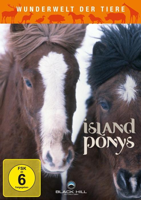 Wunderwelt der Tiere - Island Ponys