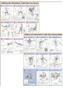Strength Training Anatomy Poster Series - Frederic Delavier [7 Posters]