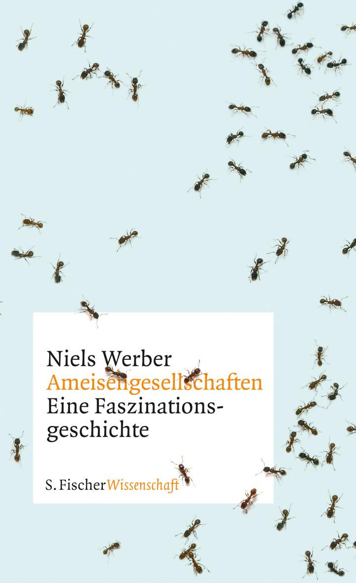Ameisengesellschaften: Eine Faszinationsgeschic...