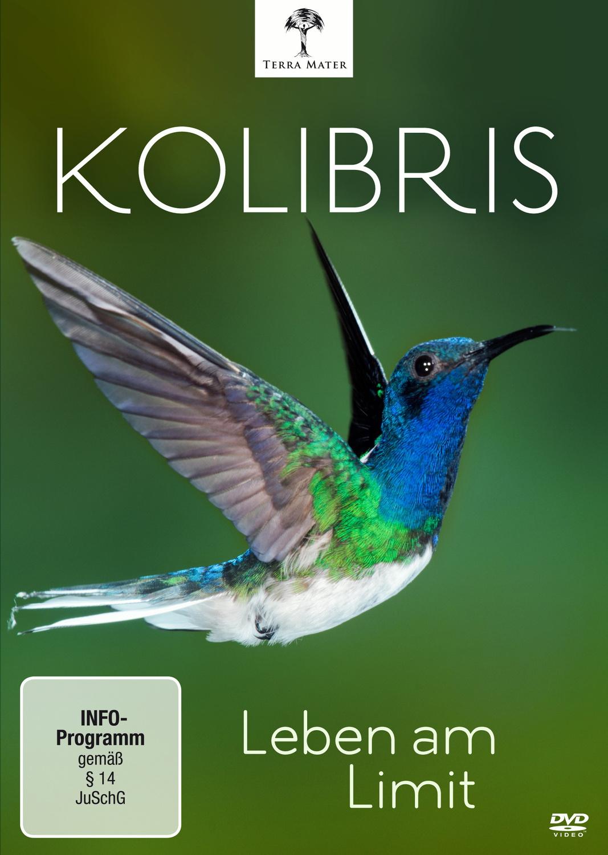 Kolibris - Leben am Limit