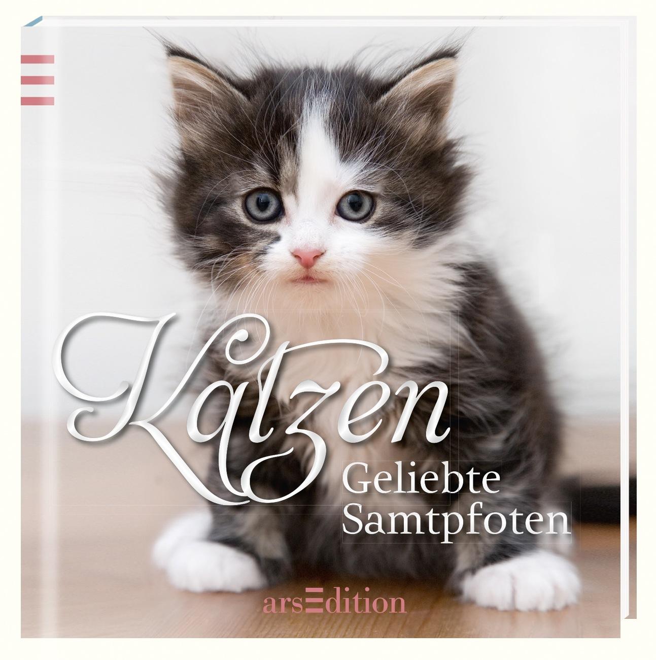 Katzen: Liebste Samtpfoten - kein Autor