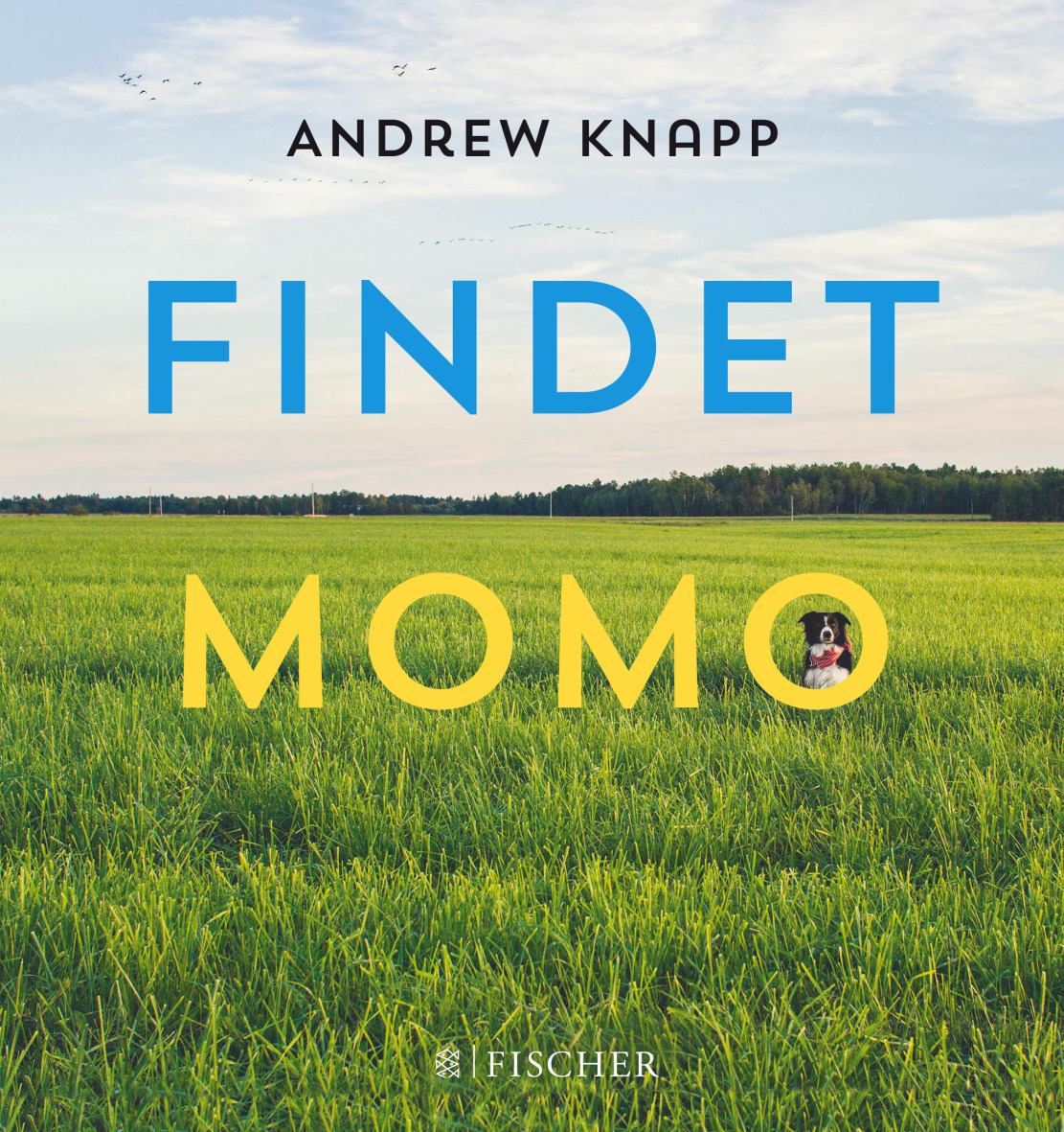 Findet Momo - Knapp Andrew [Gebundene Ausgabe]