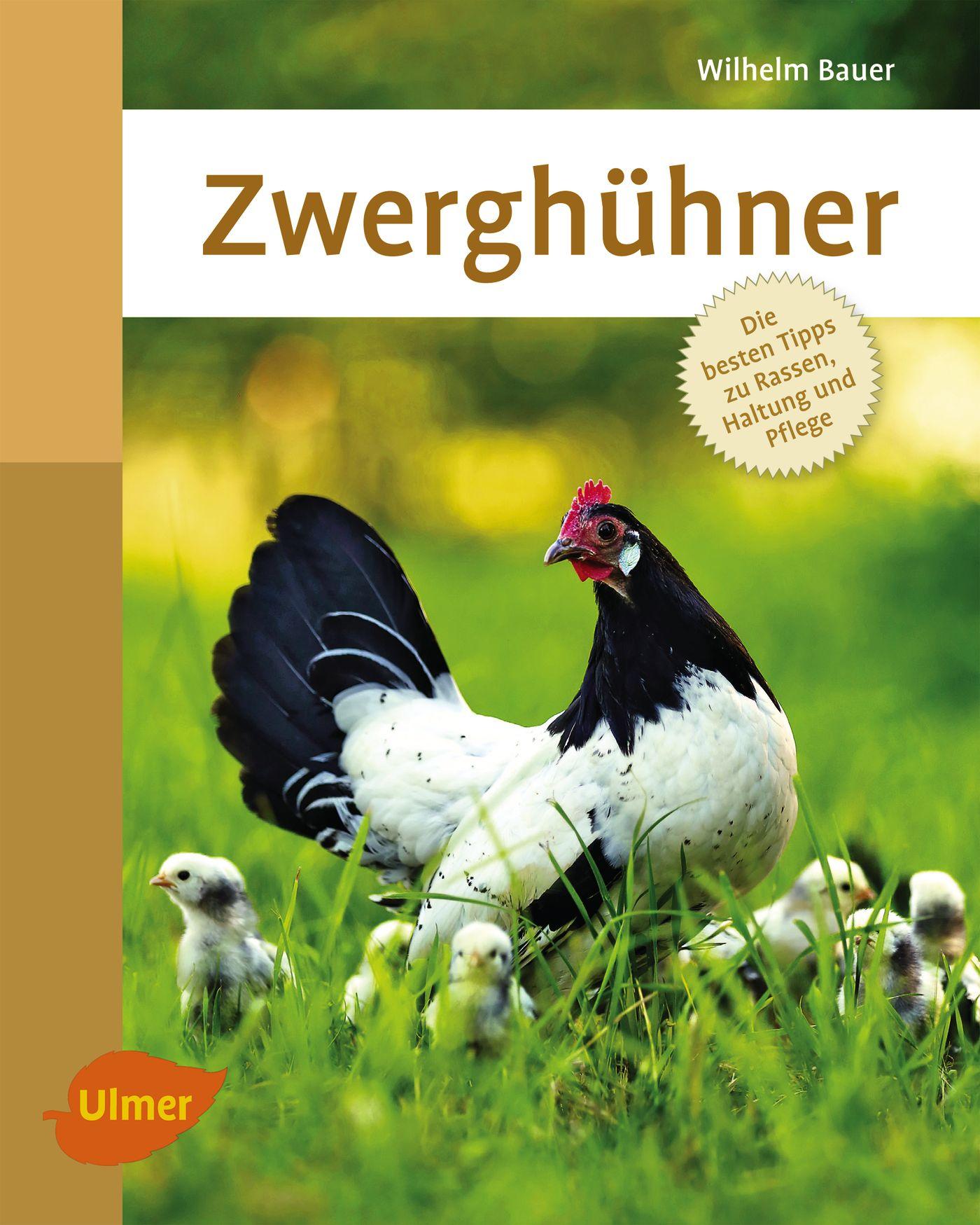 Zwerghühner: Die besten Tipps zu Rassen, Haltun...