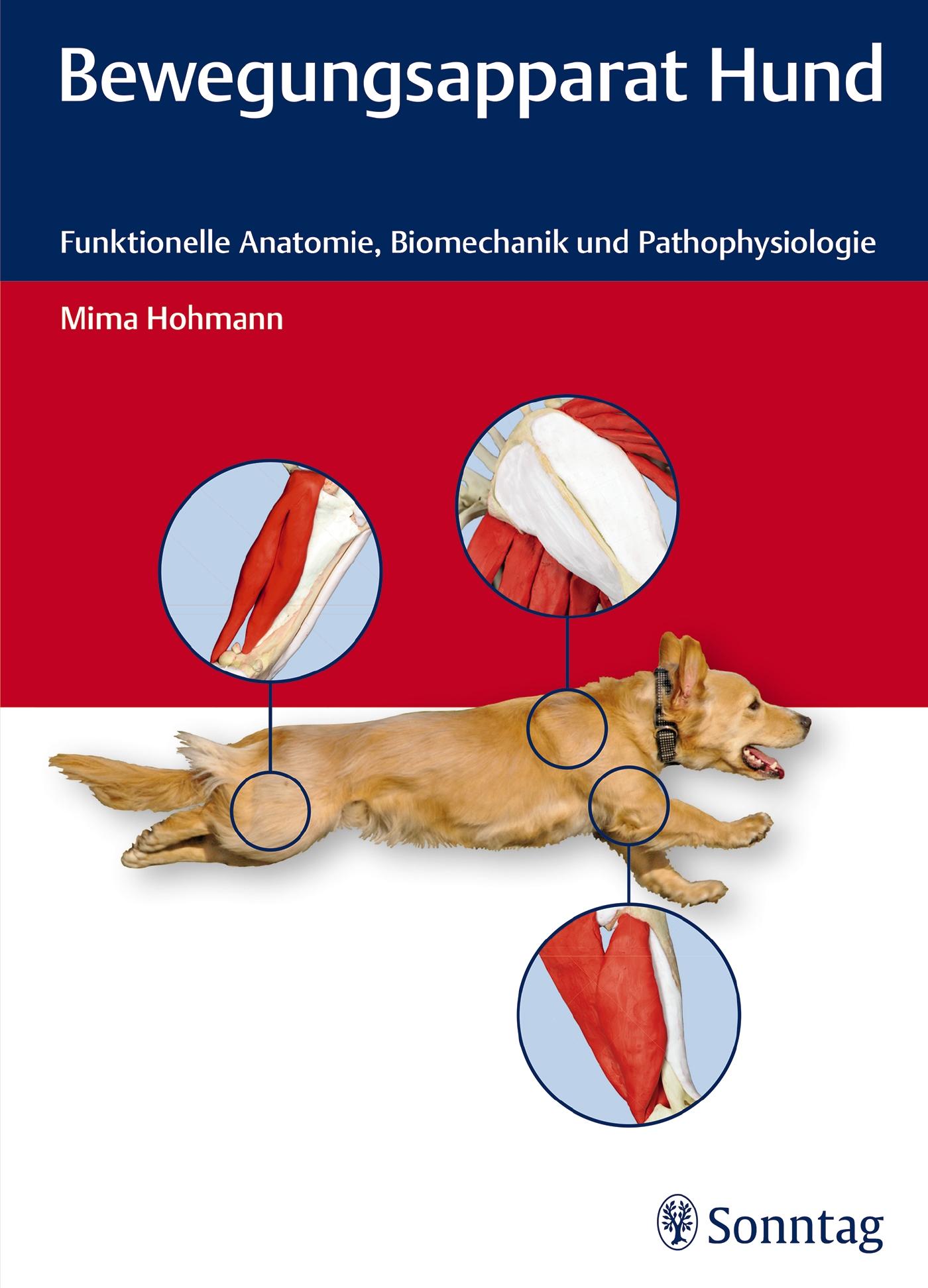 Bewegungsapparat Hund: Funktionelle Anatomie, Biomechanik und Pathophysiologie - Hohmann, Mima